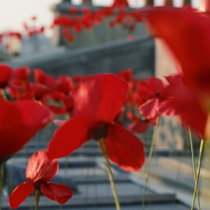 Fleur-coquelicot-deco