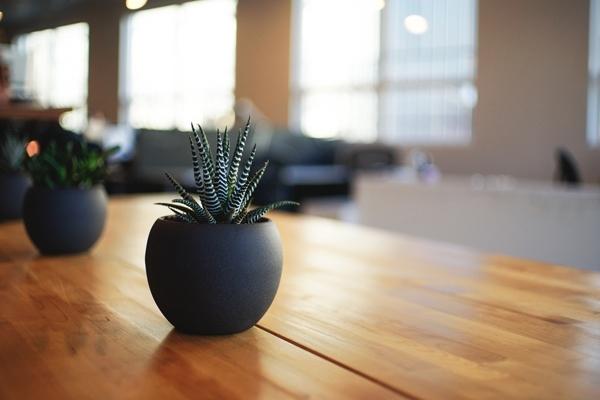 plante sur table design