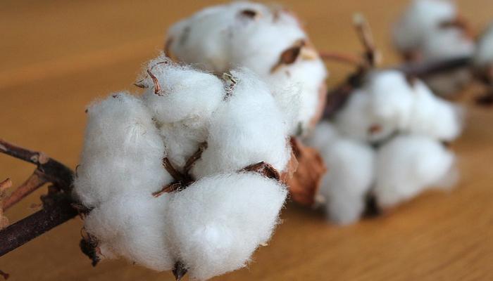 fleur coton