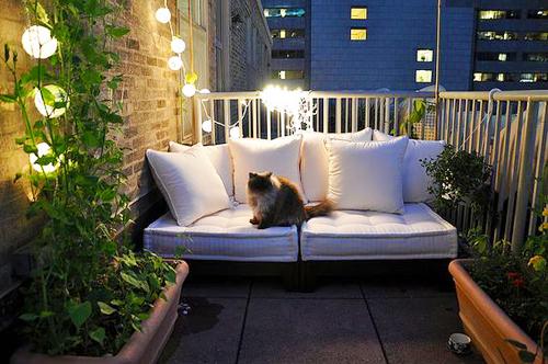 Balcon-fauteuil-blanc-et-chat
